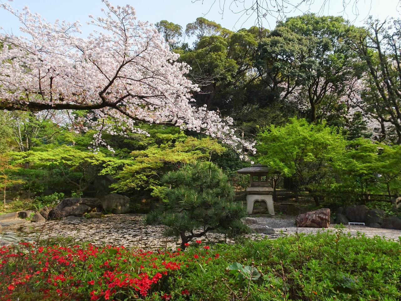 掃部山公園の桜と池
