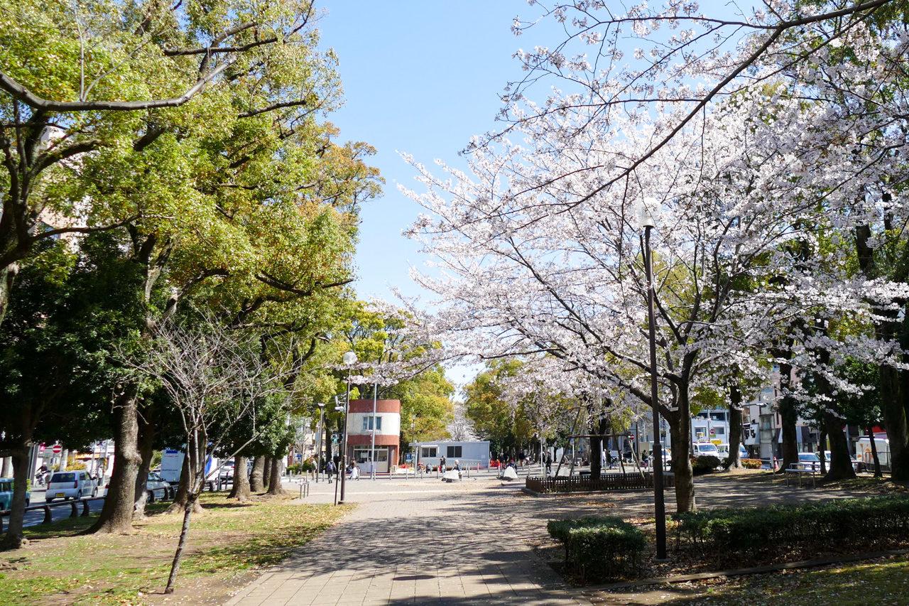 横浜の大通り公園