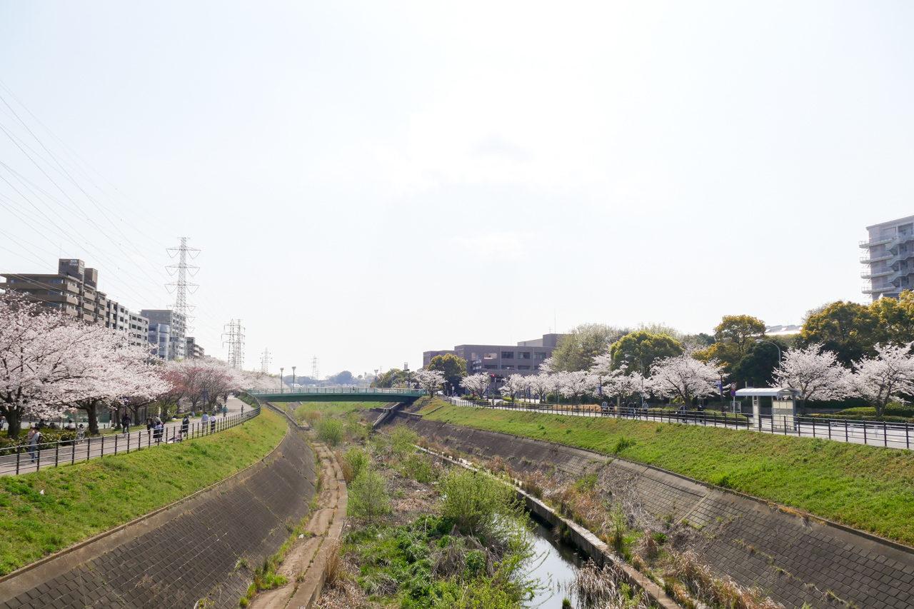 新横浜の鳥山川の桜