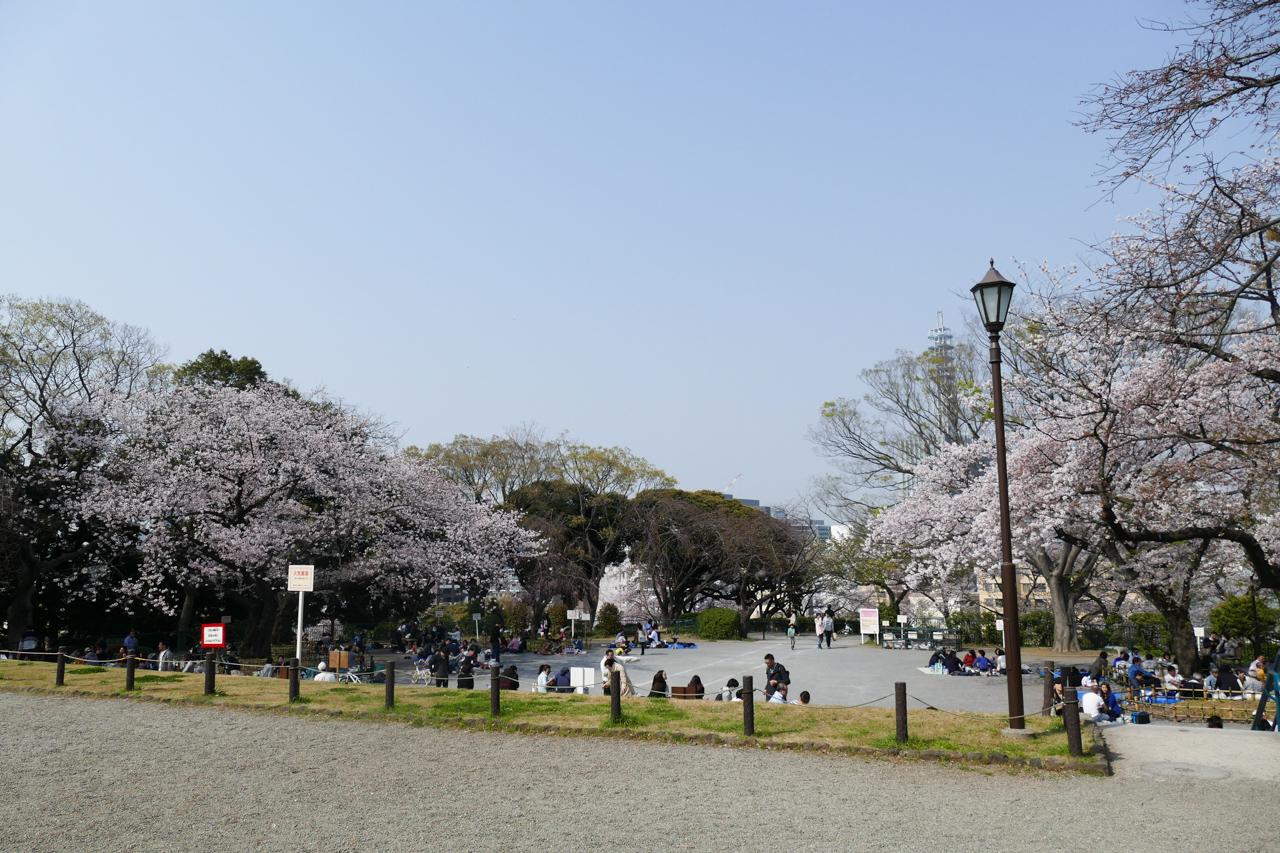 掃部山公園の広場