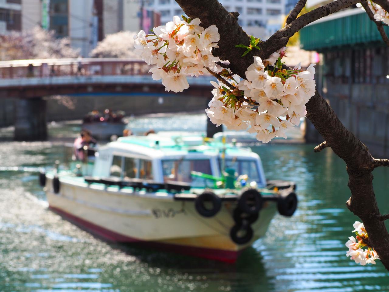 宮川橋と桜