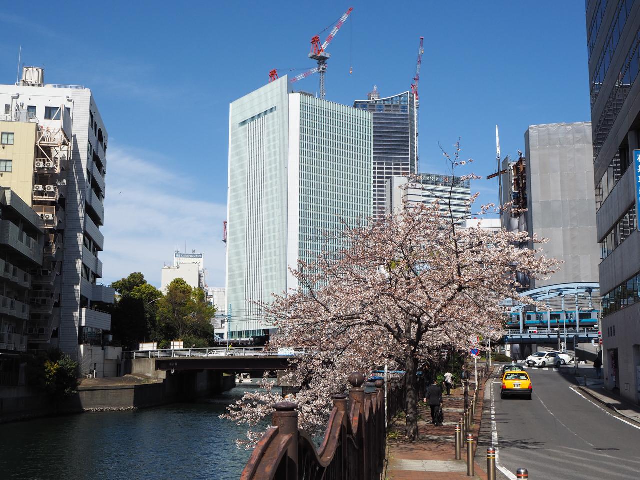 桜川橋と桜